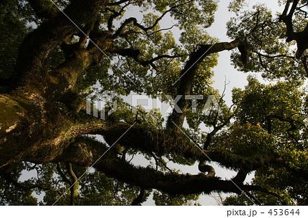 大木 木 欝蒼 鬱そうの写真素材 ...