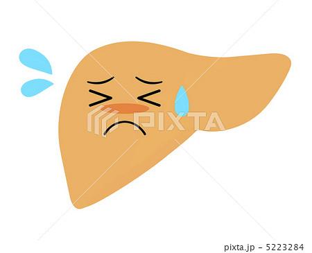 「肝臓 イラスト」の画像検索結果