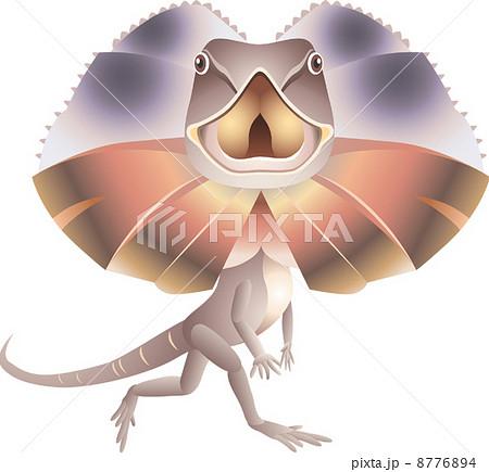 エリマキトカゲの写真素材 Pixta