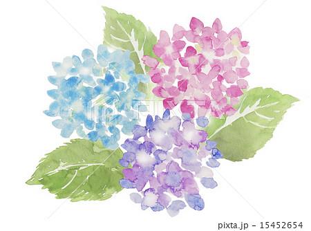 水彩 花 紫陽花 彩りのイラスト素材 Pixta