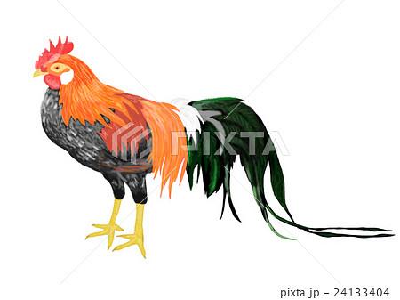 尾長鳥 イラスト オナガドリのイラスト素材 Pixta