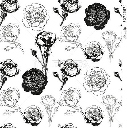 薔薇 イラスト 影 モノクロ モノクロームの写真素材 Pixta