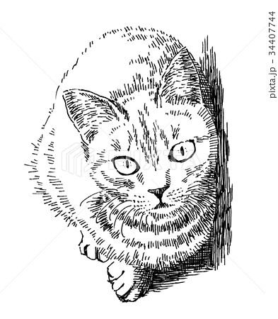 トラ猫 猫 動物 ペン画のイラスト素材 Pixta