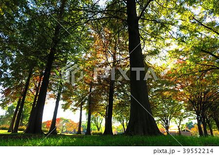 欝蒼 風景の写真素材 - PIXTA