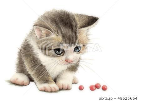 子猫のイラスト素材集 Pixta ピクスタ