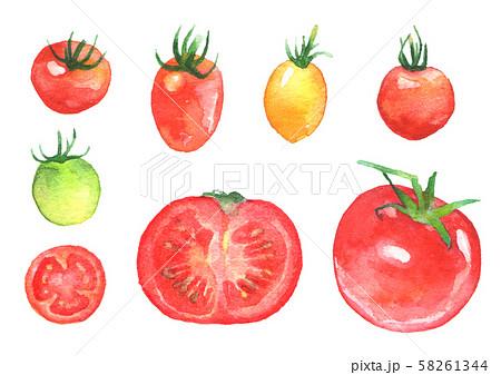 トマト断面のイラスト素材